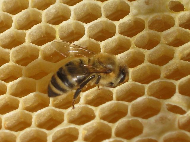 čebelji vosek cena